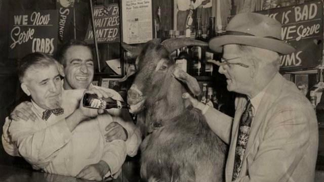 The Billy Goat Curse A Cubs Legend - Photo