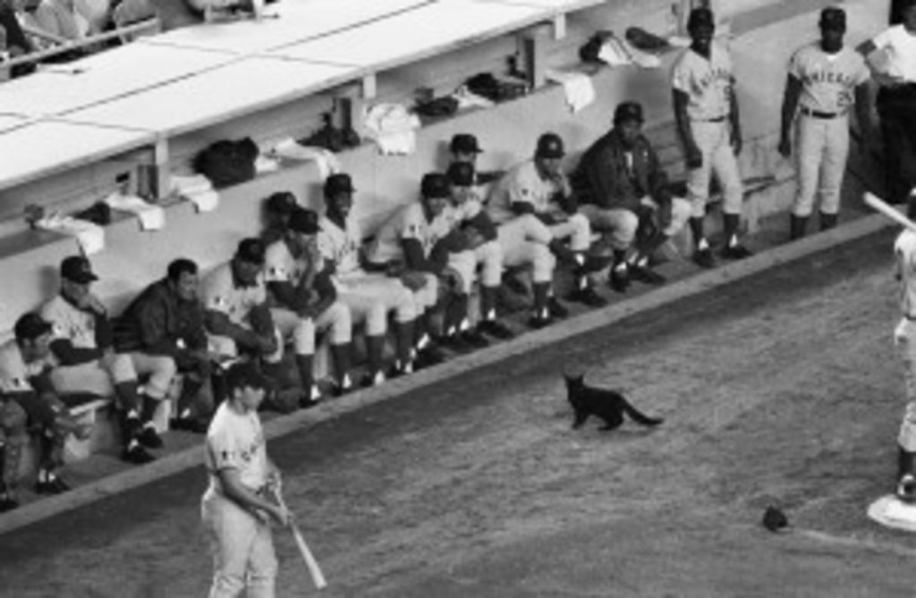Black and white photo of Cub's dugout with black cat